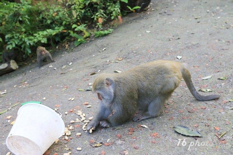 A-Tainan-monkey-21