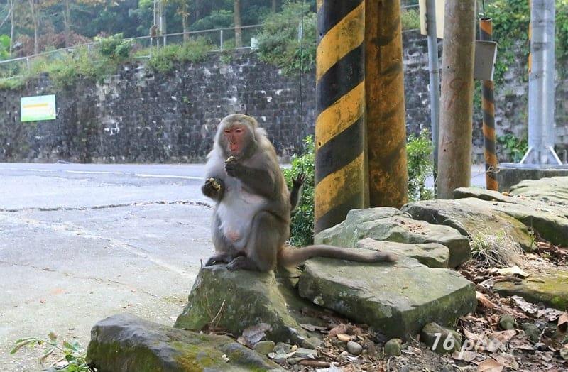 A-Tainan-monkey-25