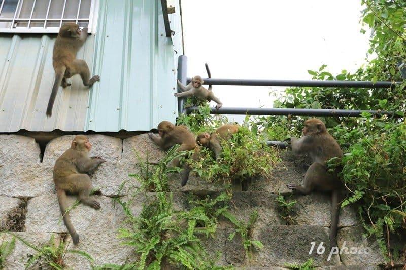 A-Tainan-monkey-28