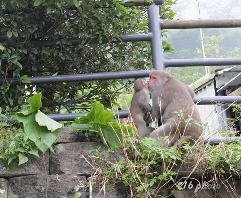 A-Tainan-monkey-31