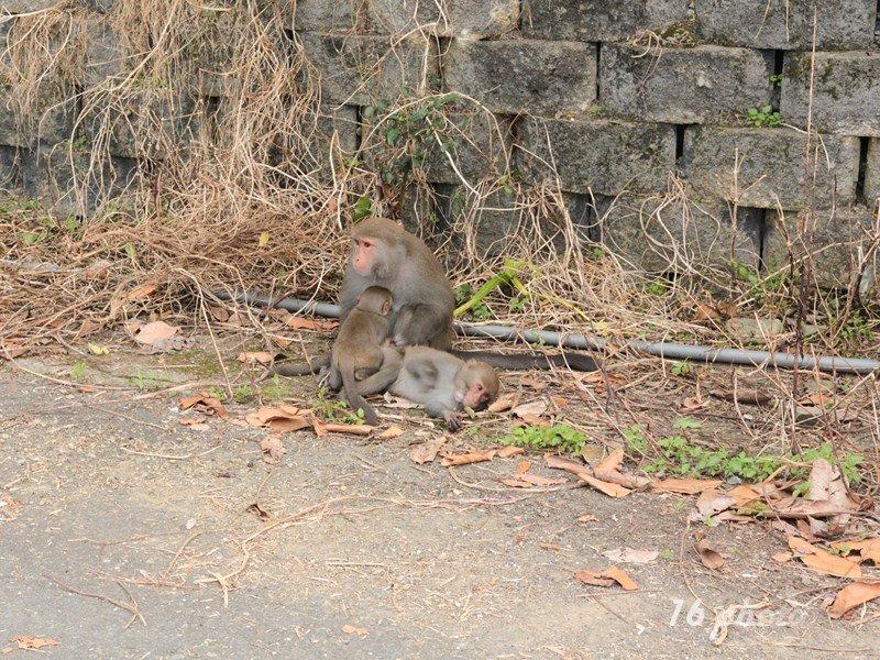 A-Tainan-monkey-33