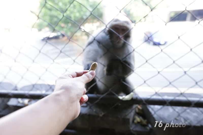 A-Tainan-monkey-8