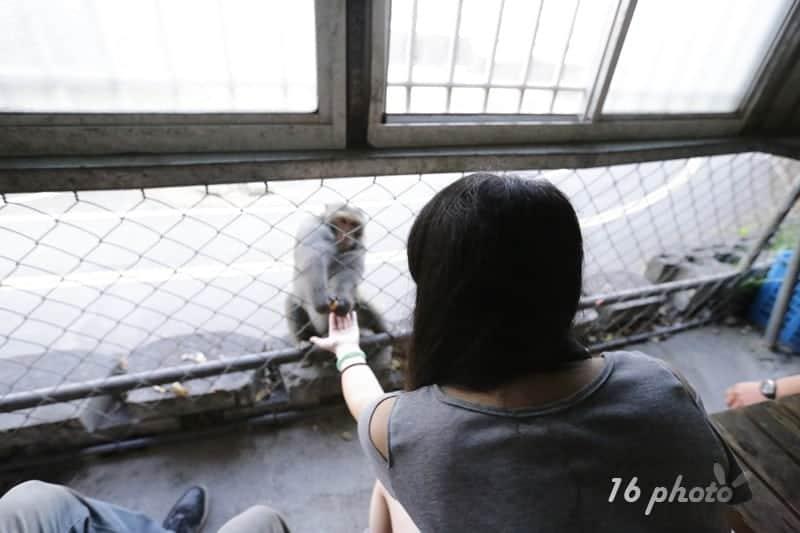 A-Tainan-monkey-9