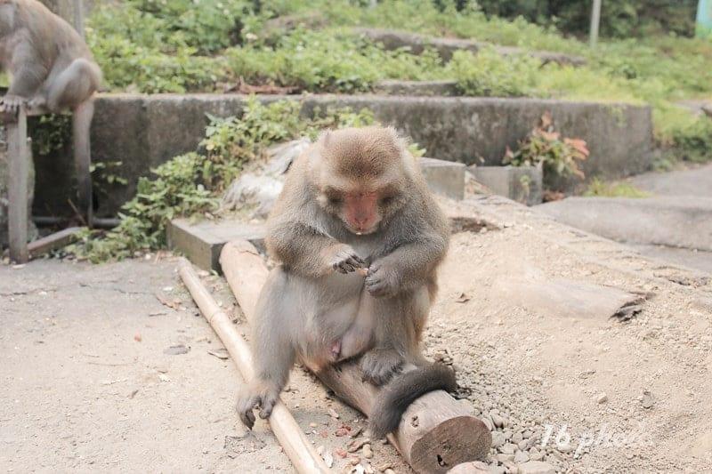 C-Tainan-monkey-10
