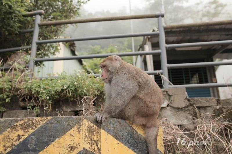 C-Tainan-monkey-15