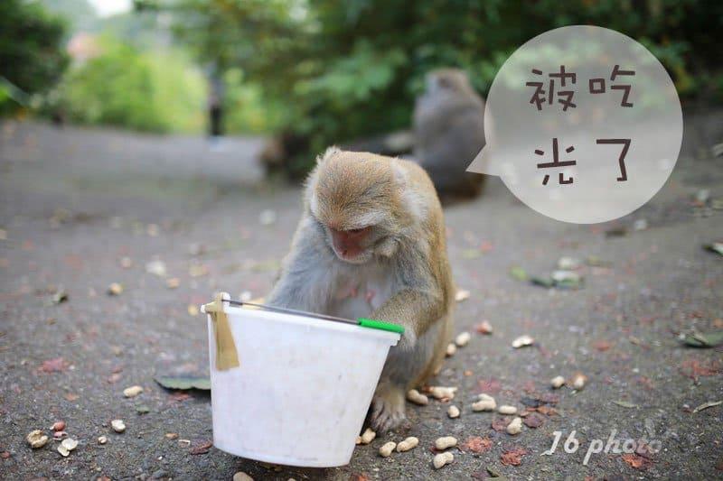 C-Tainan-monkey-16