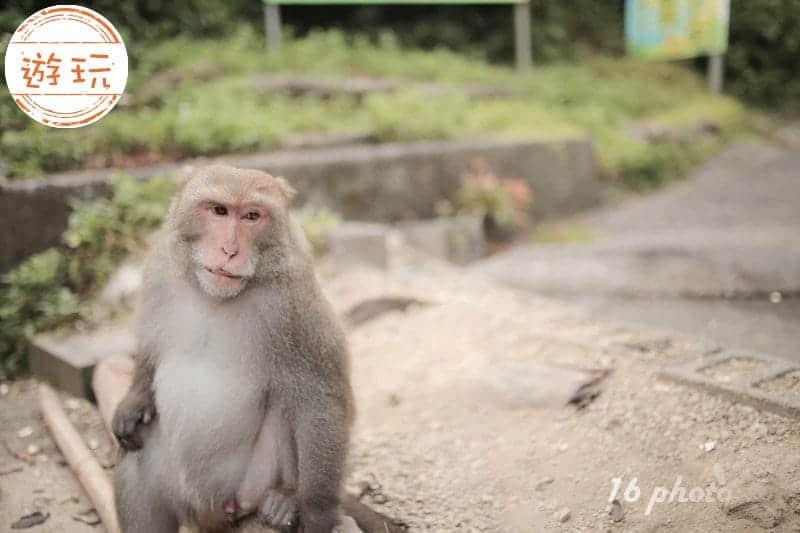 NEW-Tainan-monkey